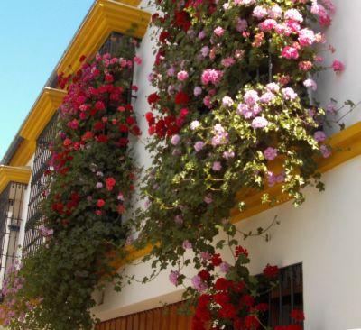 Rejas y Balcones en Córdoba