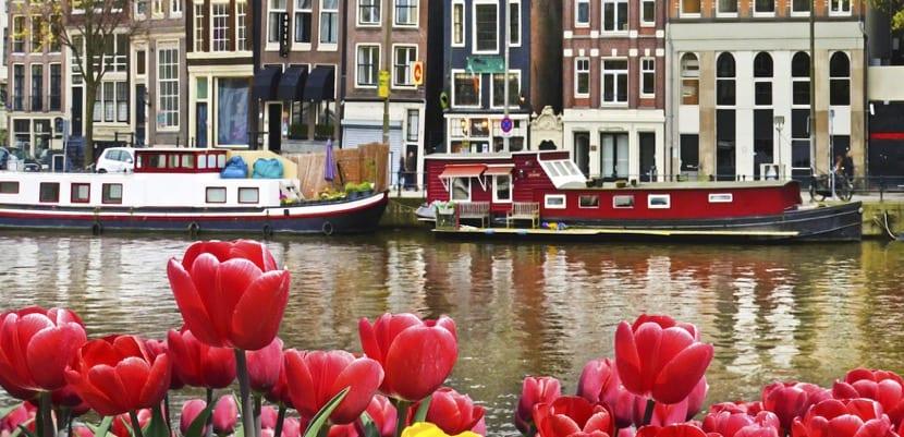 Bonitos tulipanes en Ámsterdam