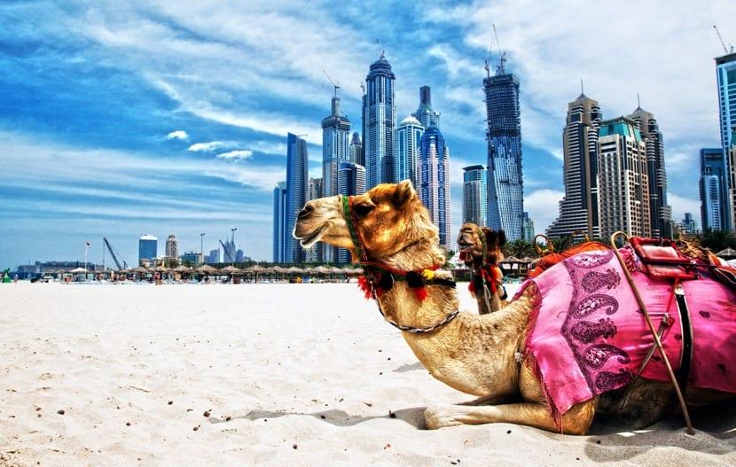 montar en camello en dubai
