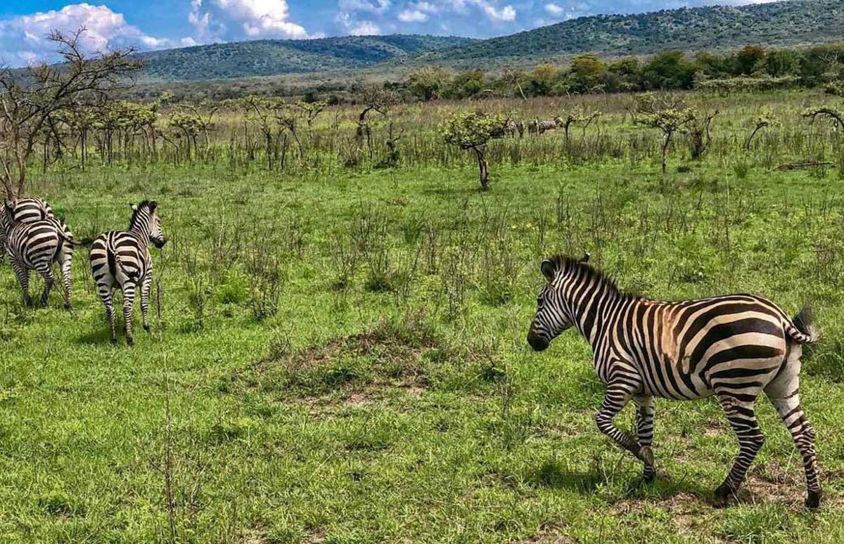 los animales en ruanda